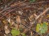 naravoslovni-dan-gozd-026