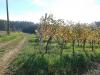 naravoslovni-dan-gozd-053